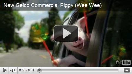 Geico Pig Meme Related Keywords Suggestions Geico Pig Meme Long